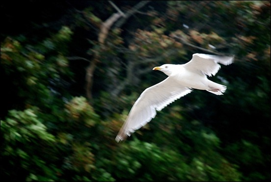 motion-blur-photography[3]