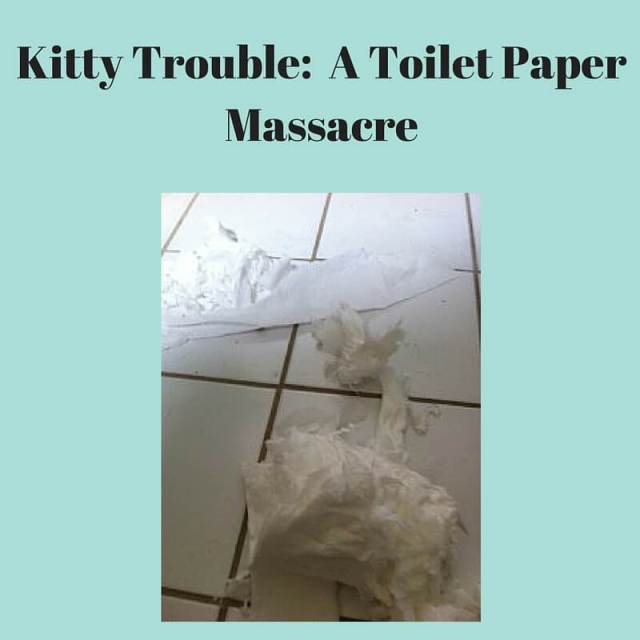 Kitty Trouble- A Toilet Paper Massacre
