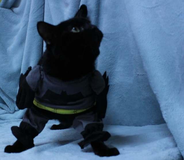 Noire is wearing a Batman Cat Costume