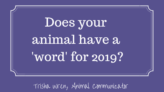 Does your animal have a word for 2019?