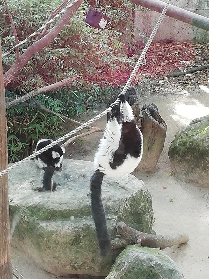 are zoo animals happy