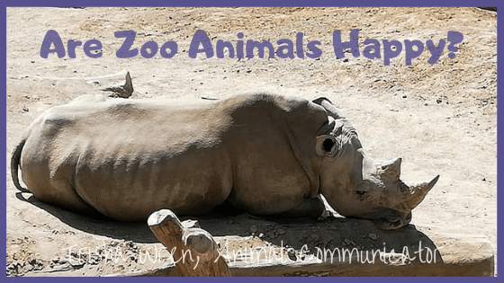 are zoo animals happy