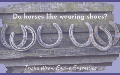 Do horses like wearing shoes?