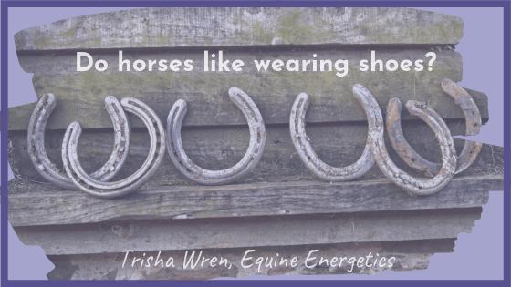 Do horses like wearing shoes?