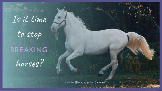 Is it time to stop 'breaking' horses?