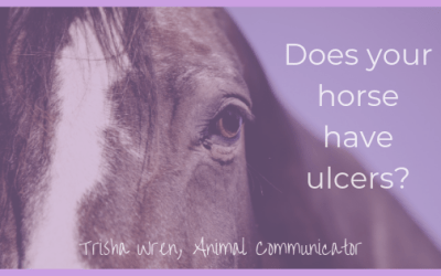 Does my horse have ulcers?