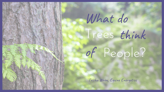 What do trees think of people?