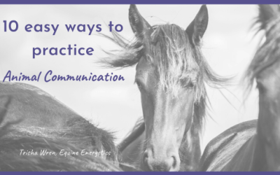 10 easy ways to practice Animal Communication
