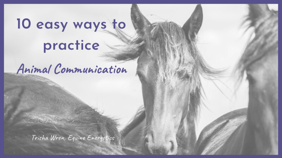 easy ways to practice animal communication