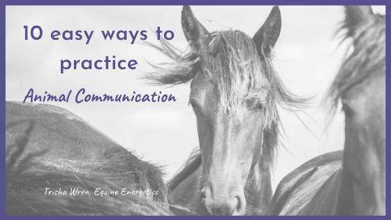 easy ways to practice animal communication