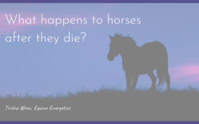 What happens to horses and pets after they die?