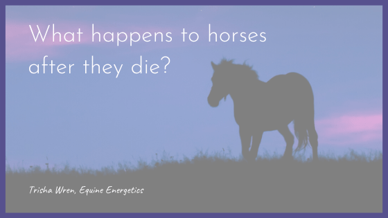 what happens to horses and pets after they die