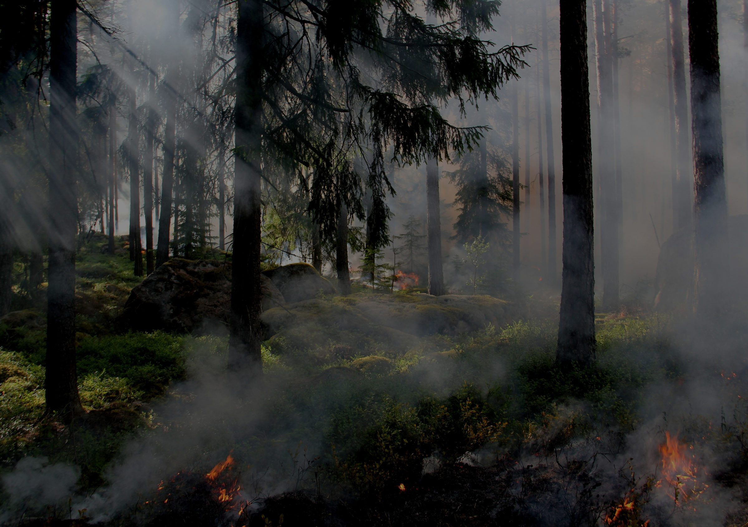 forest fires burning in thick trees