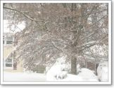 blog-snow-tree