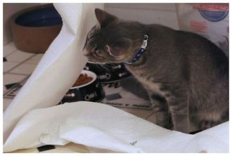 cats playing with paper towels