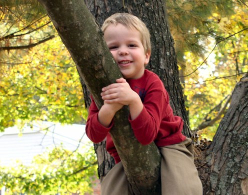 Sweet boy in a tree.