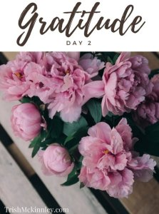 Pink flower in grew pot with 'Gratitude - Day 2' written above