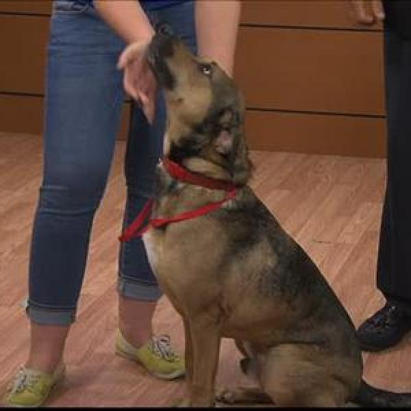 Pet of the Day - 6_9_15_792532219212284675