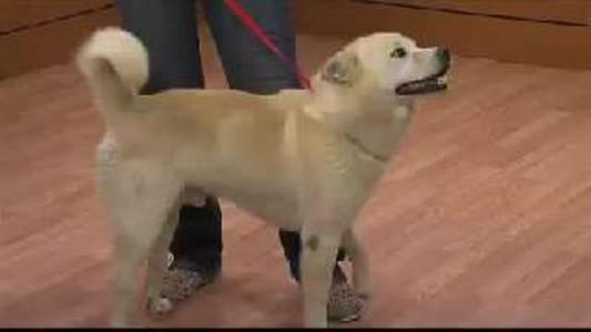 Pet of the Day - 6_23_15_277192500253379533