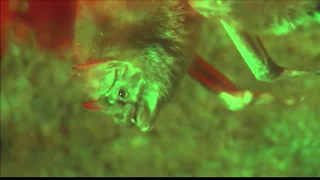 Expert- Leave Bats Alone_20150827222504
