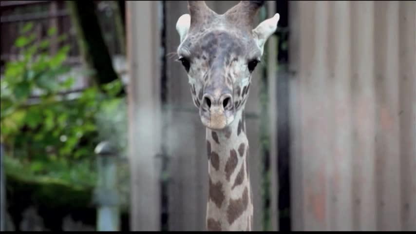 Mesker Park Zoo Educating Tri-staters on Giraffe Extinction_26799691