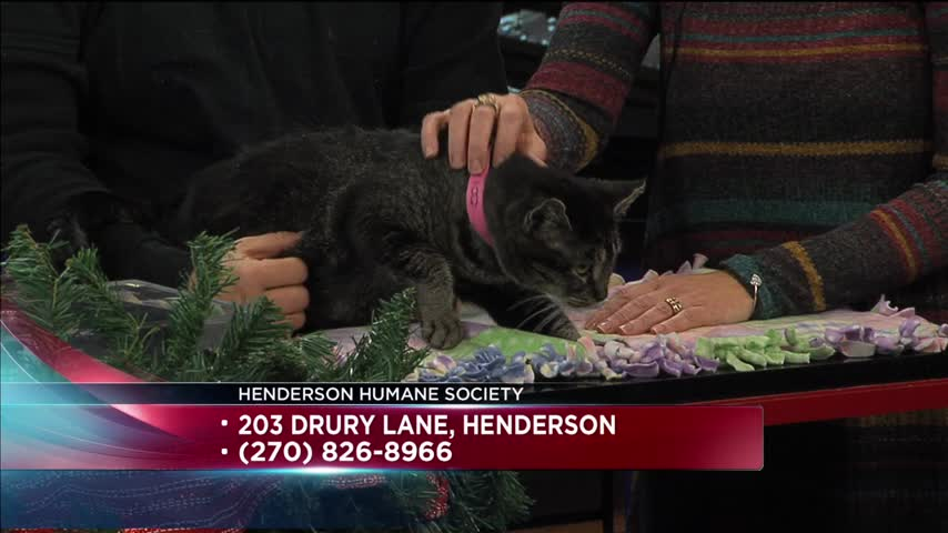 Pet of the Day (12/20/16)