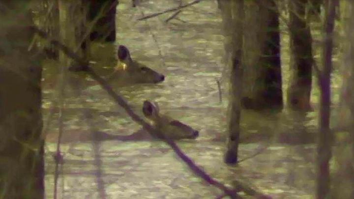 river deer FOR WEB_1522403235056.jpg.jpg