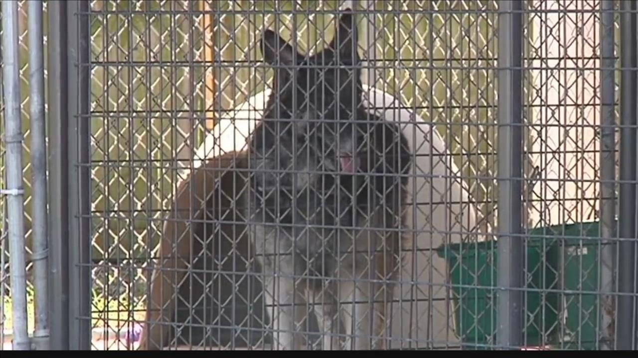 Online_registry__animal_abuse_law_change_0_20180905125825