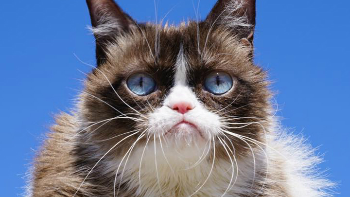 grumpy cat FOR WEB_1558092573500.jpg.jpg