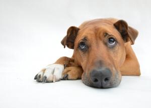 Trockenfleisch für Hunde, Trockenfleisch Hund