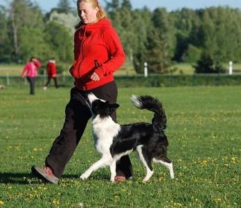 Trening av hund – hva er lov