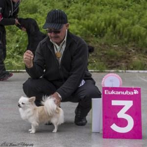 BIS 3 veteran Chihuahua langhåret, Int N GIB Ch Kallebo's Mexican White. Eier: Karl Berg, Bodø