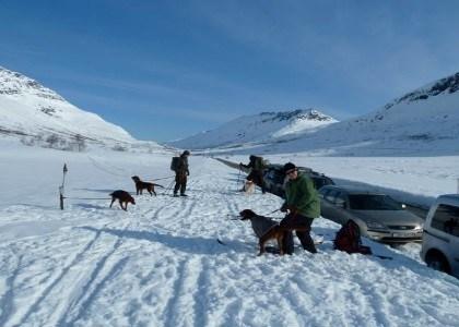 Hund på Troms Turlags hytter.