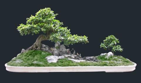 Tỉ lệ giữa cây cối, núi đá, các chi tiết trang trí cần phải hòa hòa để tạo nên tác phẩm tiểu cảnh đẹp