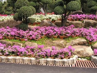 Hoa xếp từng mảng theo tầng bậc chen đá, chen cây níu chân khách tham quan