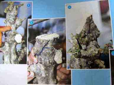 Xây dựng tác phẩm Bonsai - Hình 8,9 & 10