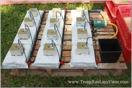Dụng cụ trồng rau tại nhà bằng dung dịch thủy canh