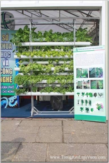 Mô hình trồng rau tự động hóa
