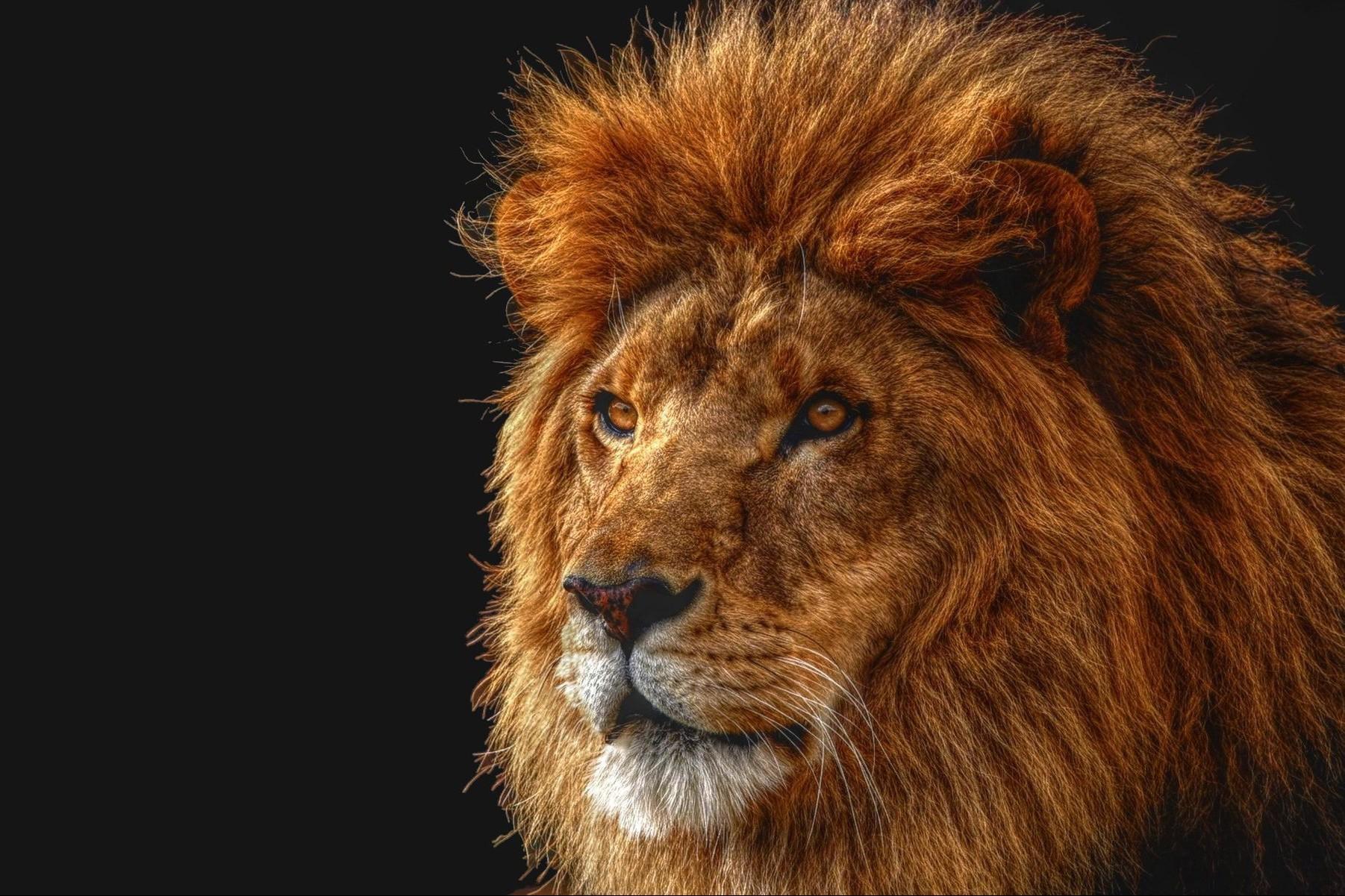 Lo zimbabwe revoca alcune restrizioni sulla caccia a leoni for Simulatore di arredamento