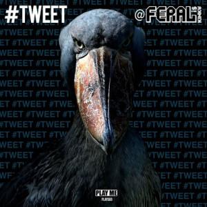 Tweet Retweet
