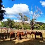Horseback riding Trinidad