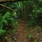 Hiking el Yunke Baracoa Cuba