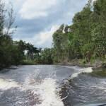 Tour in Zapata Swamp Cuba