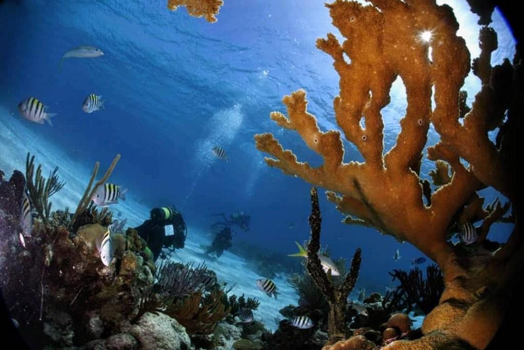 Diving in underwater paradise Cuba