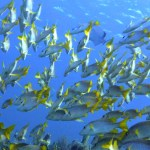 Diving Cayo Largo Package