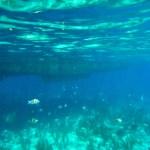 Underwater Cayo Guillermo