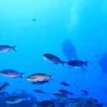 diving Giron