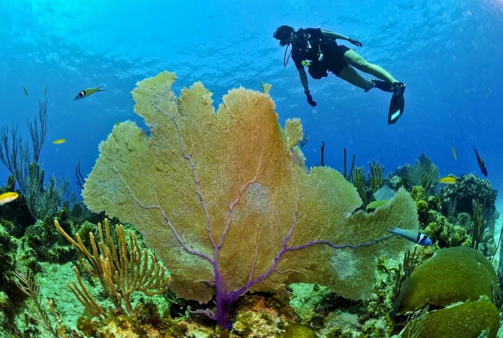 Enjoying the underwater of Cuba - Diving