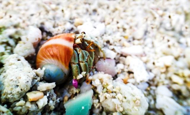 Complete Hermit Crab Food List 6
