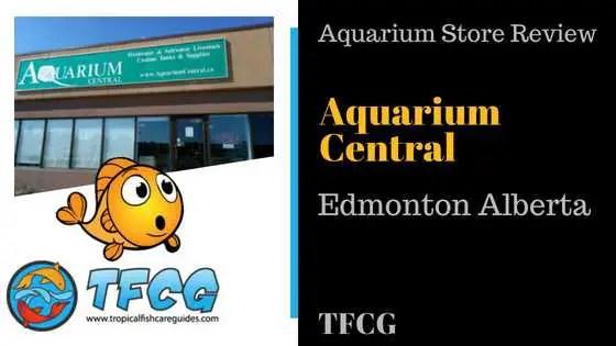 Aquarium Plants Edmonton